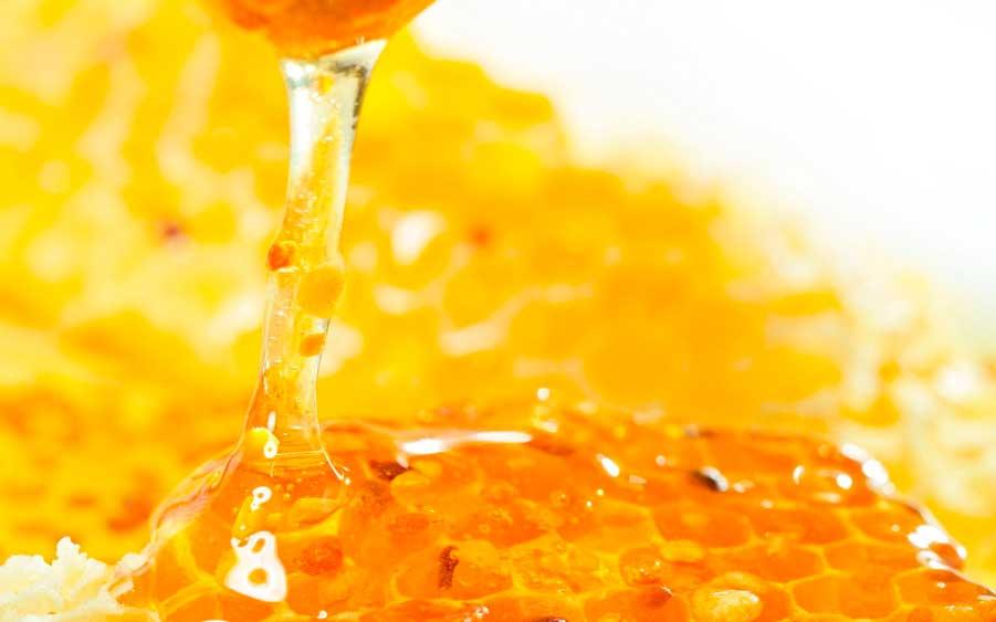 плелинный мед